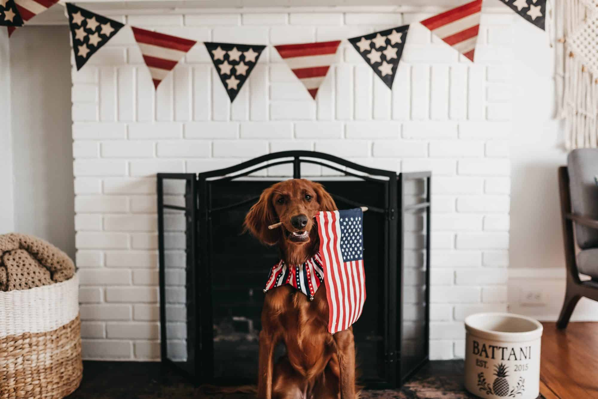 A Dog in front of fireplace, with american flag in mouth